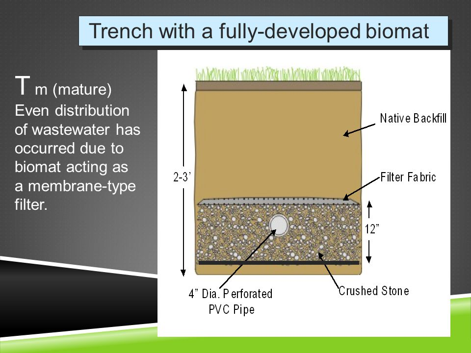 Trench with a fully-developed biomat T m (mature) Even distribution of wastewater has occurred due to biomat acting as a membrane-type filter.