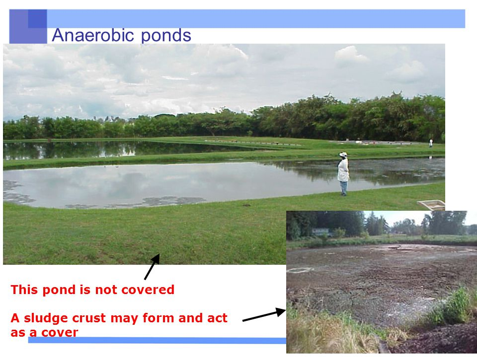 Anaerobic ponds This pond is not covered A sludge crust may form and act as a cover http://cff.wsu.edu/Project/galleryconstruction.htm