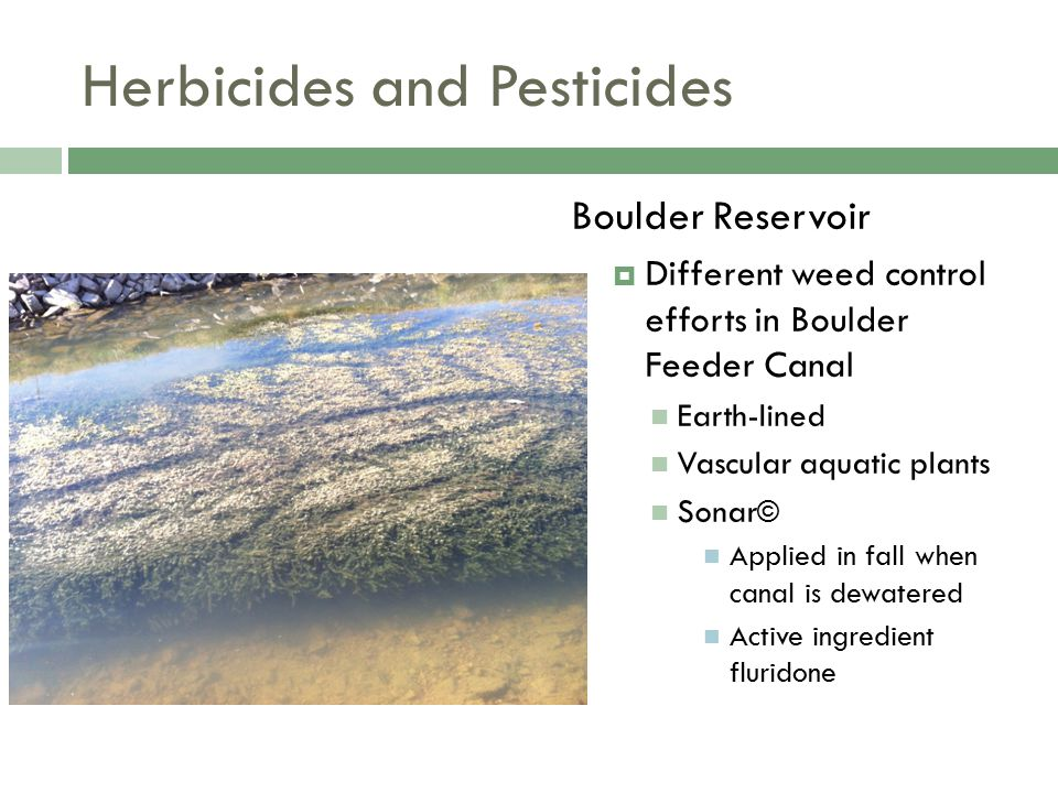 Herbicides and Pesticides Boulder Reservoir  Different weed control efforts in Boulder Feeder Canal Earth-lined Vascular aquatic plants Sonar © Applied in fall when canal is dewatered Active ingredient fluridone