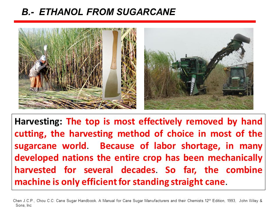 Harvesting: The top is most effectively removed by hand cutting, the harvesting method of choice in most of the sugarcane world.