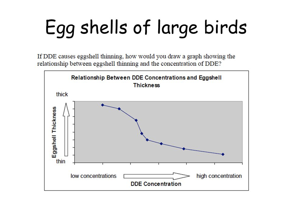 Egg shells of large birds