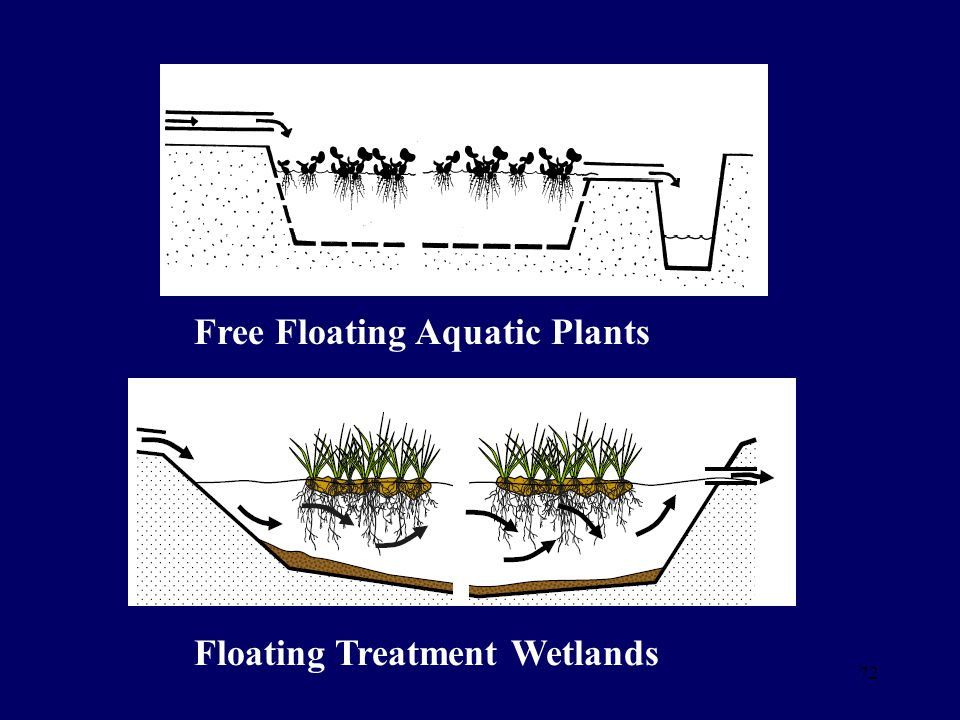 Free Floating Aquatic Plants Floating Treatment Wetlands 72