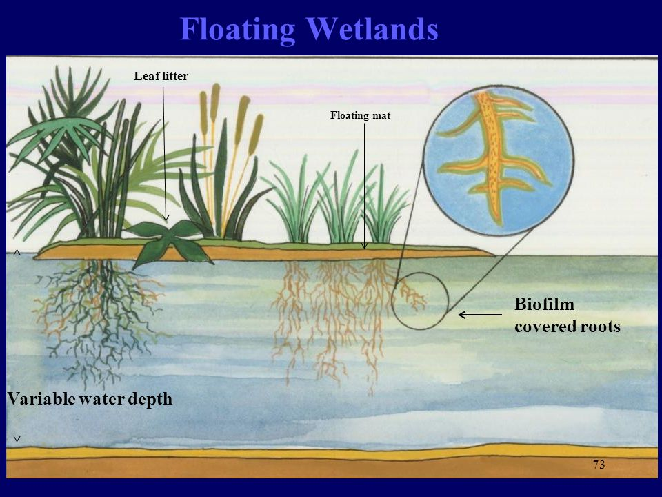 Floating Wetlands Biofilm covered roots Variable water depth Floating mat Leaf litter 73