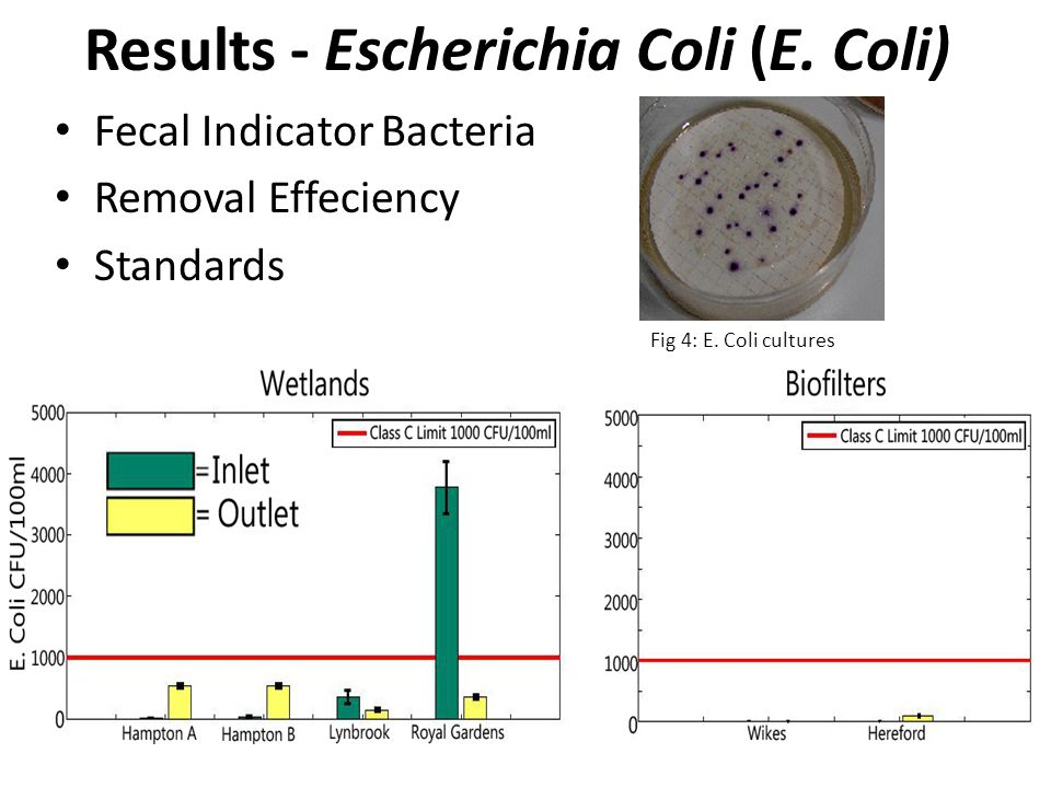 Results - Escherichia Coli (E.