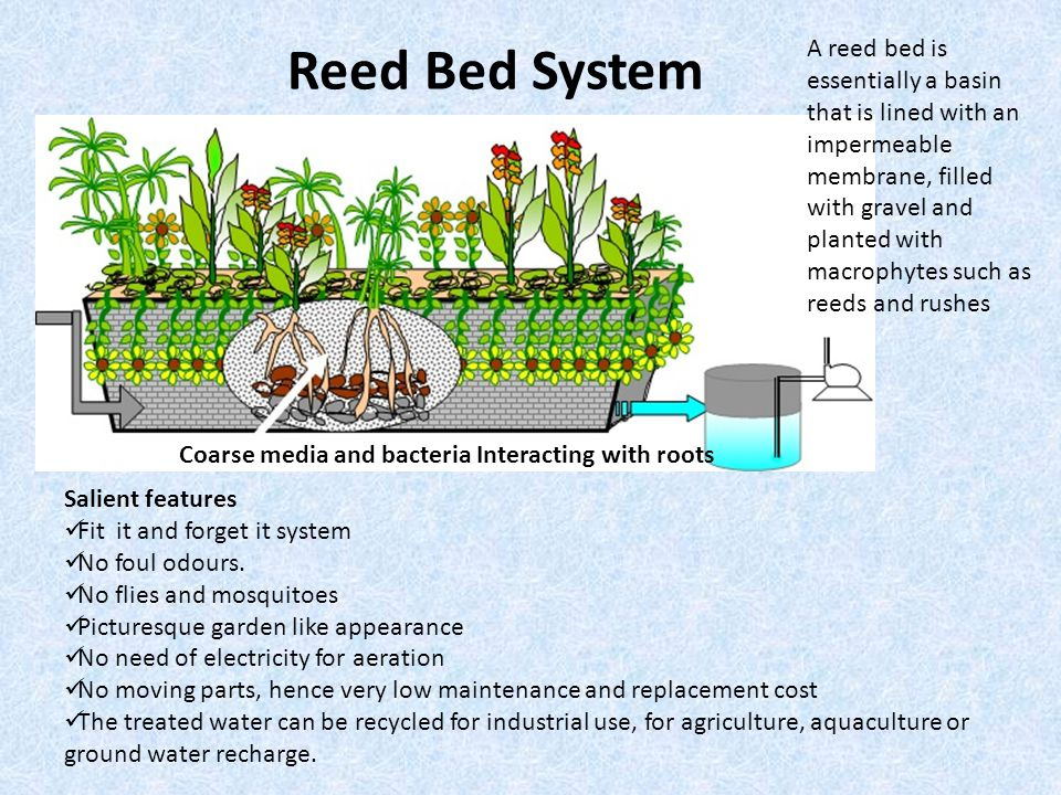 Reed Bed System Coarse media and bacteria Interacting with roots Salient features Fit it and forget it system No foul odours.