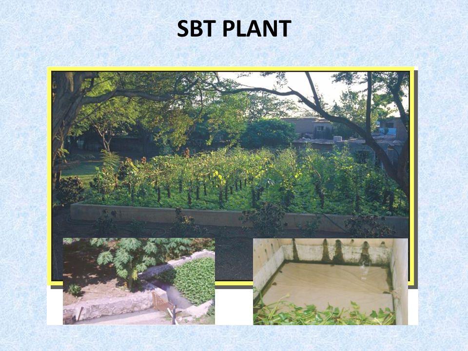 SBT PLANT