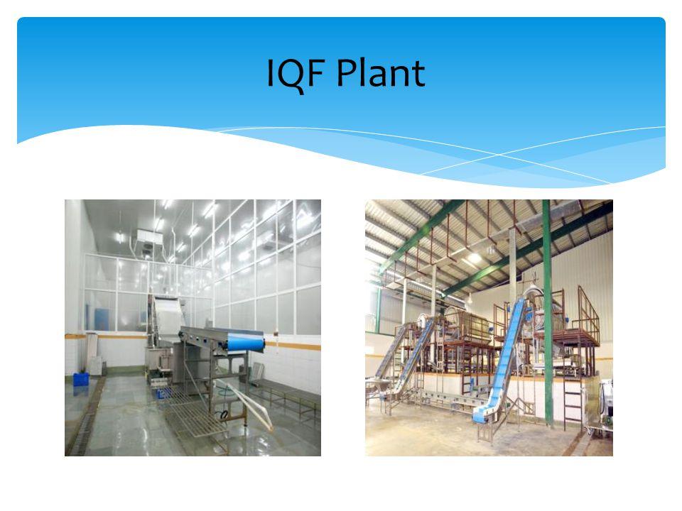 IQF Plant