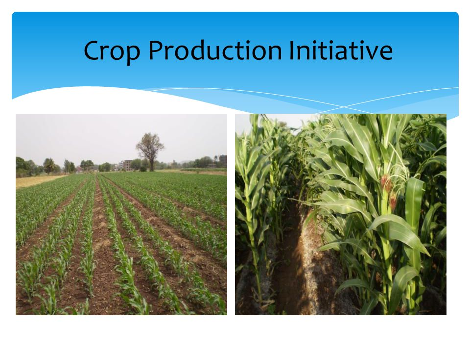 Crop Production Initiative