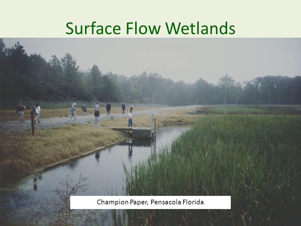 Surface Flow Wetlands Champion Paper, Pensacola Florida