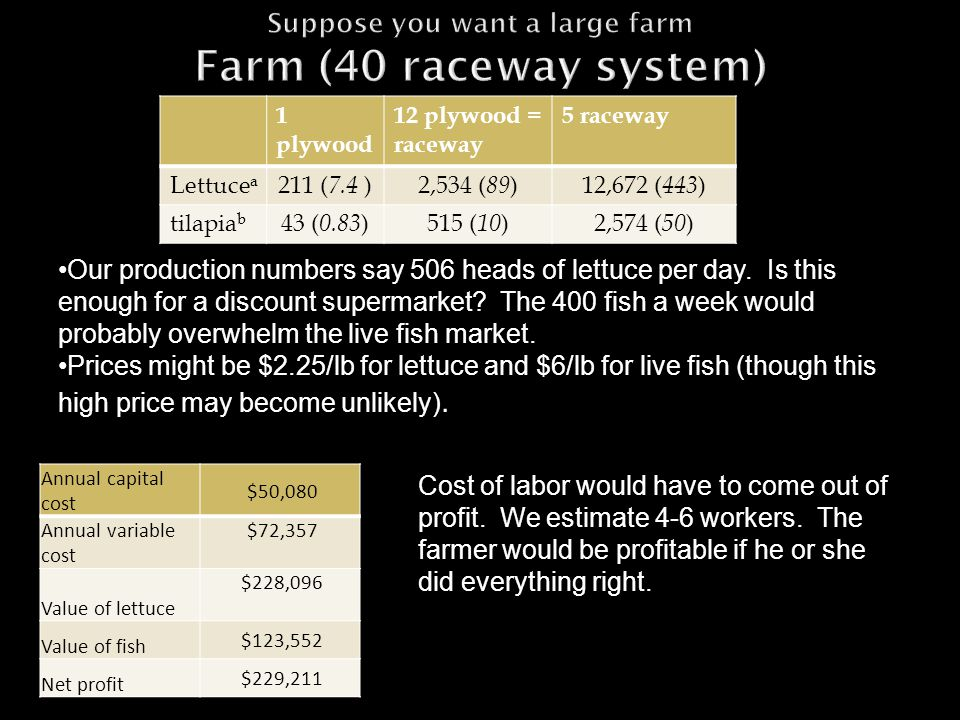 1 plywood 12 plywood = raceway 5 raceway Lettuce a 211 ( 7.4 )2,534 ( 89 )12,672 ( 443 ) tilapia b 43 ( 0.83 )515 ( 10 )2,574 ( 50 ) Our production numbers say 506 heads of lettuce per day.