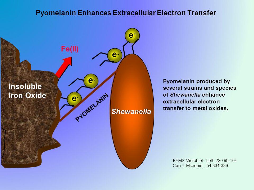 Pyomelanin Enhances Extracellular Electron Transfer FEMS Microbiol.