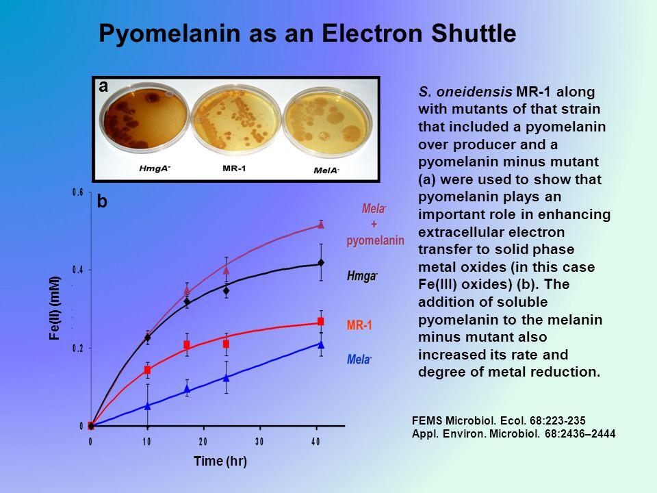 Pyomelanin as an Electron Shuttle Time (hr) Fe(II) (mM) FEMS Microbiol.