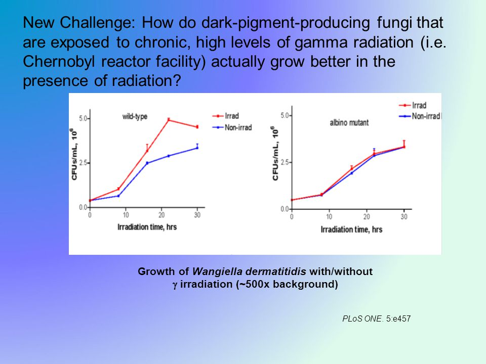 Growth of Wangiella dermatitidis with/without  irradiation (~500x background) New Challenge: How do dark-pigment-producing fungi that are exposed to chronic, high levels of gamma radiation (i.e.