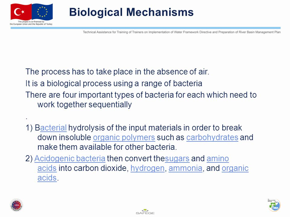 Biological Mechanisms The process has to take place in the absence of air.