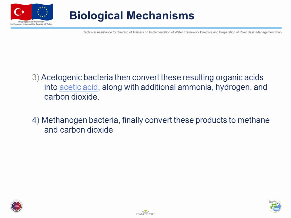 Biological Mechanisms 3) Acetogenic bacteria then convert these resulting organic acids into acetic acid, along with additional ammonia, hydrogen, and carbon dioxide.acetic acid 4) Methanogen bacteria, finally convert these products to methane and carbon dioxide