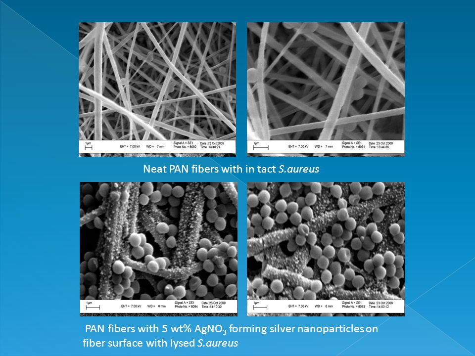 PAN fibers with 5 wt% AgNO 3 forming silver nanoparticles on fiber surface with lysed S.aureus Neat PAN fibers with in tact S.aureus