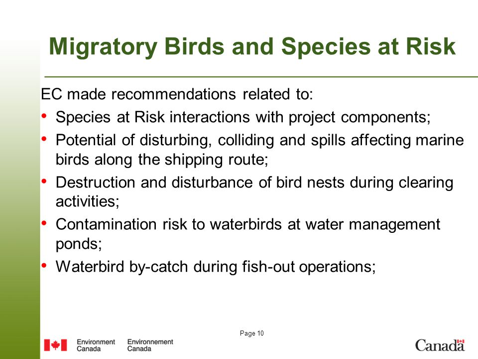 Page 10 Migratory Birds and Species at Risk EC made recommendations related to: Species at Risk interactions with project components; Potential of dis