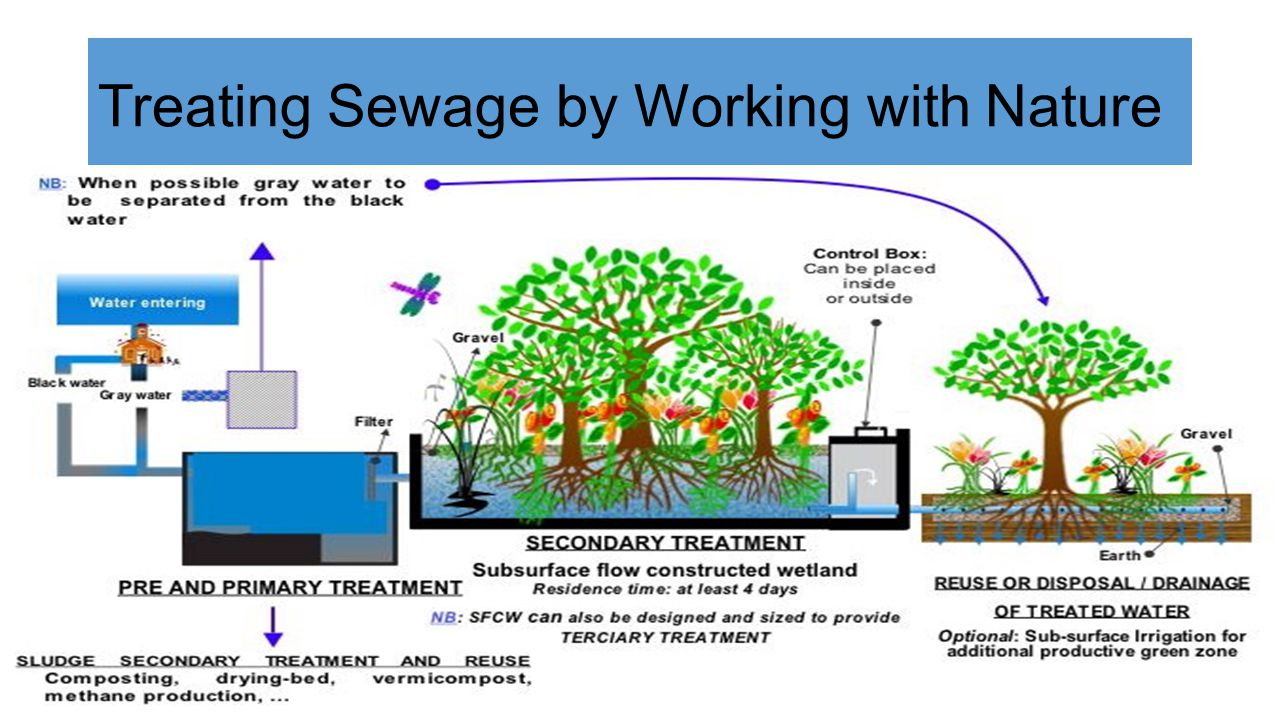 Treating Sewage by Working with Nature