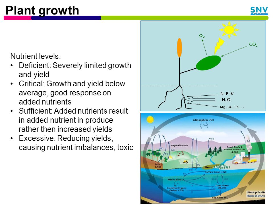 Effect of biogas slurry Dry and wet slurry on wheat TreatmentGrain yield (kg/ha) Avg over 3 yrs Increment over control (kg/ha) Control1288 Bio-slurry dry1450162 Bio-slurry wet1842554 50% dry slurry + 50% CF27061418 75% dry slurry + 25% CF1744456 Chemical fertilizer35032215 Source: Maskey, 1978 in Gurung, 1997