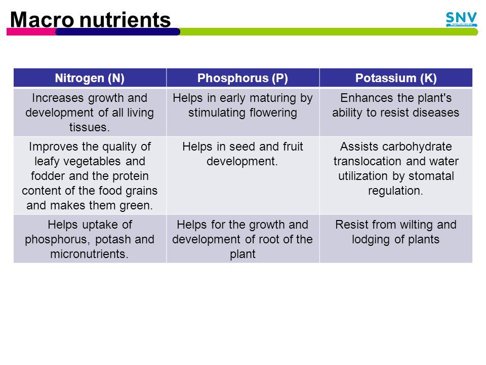 Soil Organic Matter OM: Living organisms: roots, fungi, earthworms, etc.