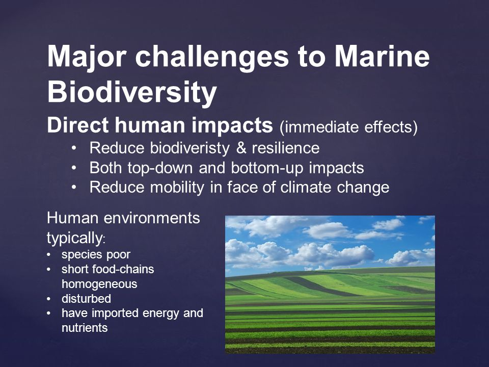 Major challenges to Marine Biodiversity Direct human impacts (immediate effects) Reduce biodiveristy & resilience Both top-down and bottom-up impacts Reduce mobility in face of climate change Human environments typically : species poor short food-chains homogeneous disturbed have imported energy and nutrients