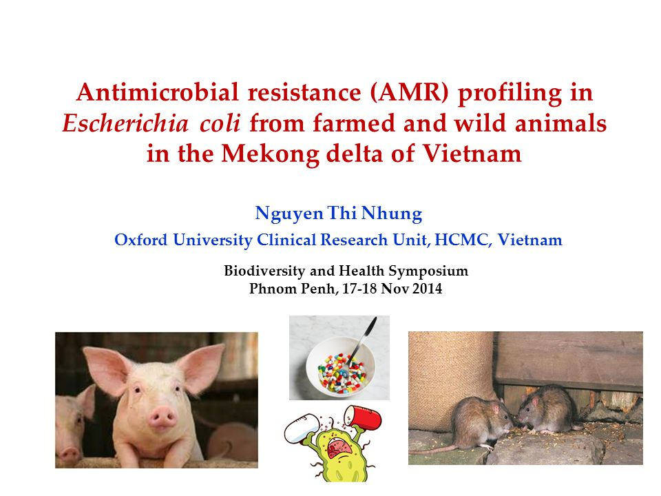 Antimicrobial resistance (AMR) profiling in Escherichia coli from farmed and wild animals in the Mekong delta of Vietnam Nguyen Thi Nhung Oxford University Clinical Research Unit, HCMC, Vietnam Biodiversity and Health Symposium Phnom Penh, 17-18 Nov 2014