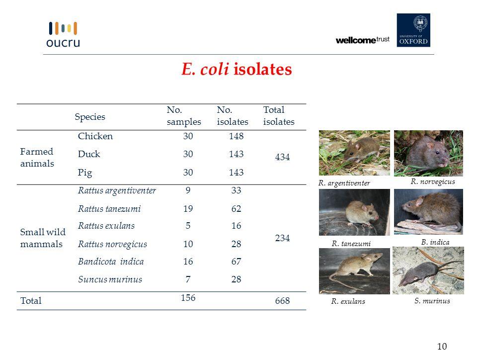 E. coli isolates Species No. samples No.