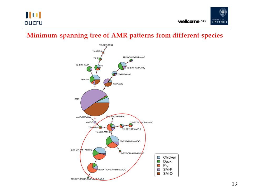 Minimum spanning tree of AMR patterns from different species 13