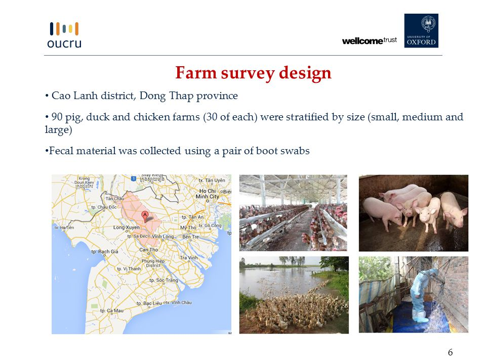 Cao Lanh district, Dong Thap province 90 pig, duck and chicken farms (30 of each) were stratified by size (small, medium and large) Fecal material was collected using a pair of boot swabs Farm survey design 6
