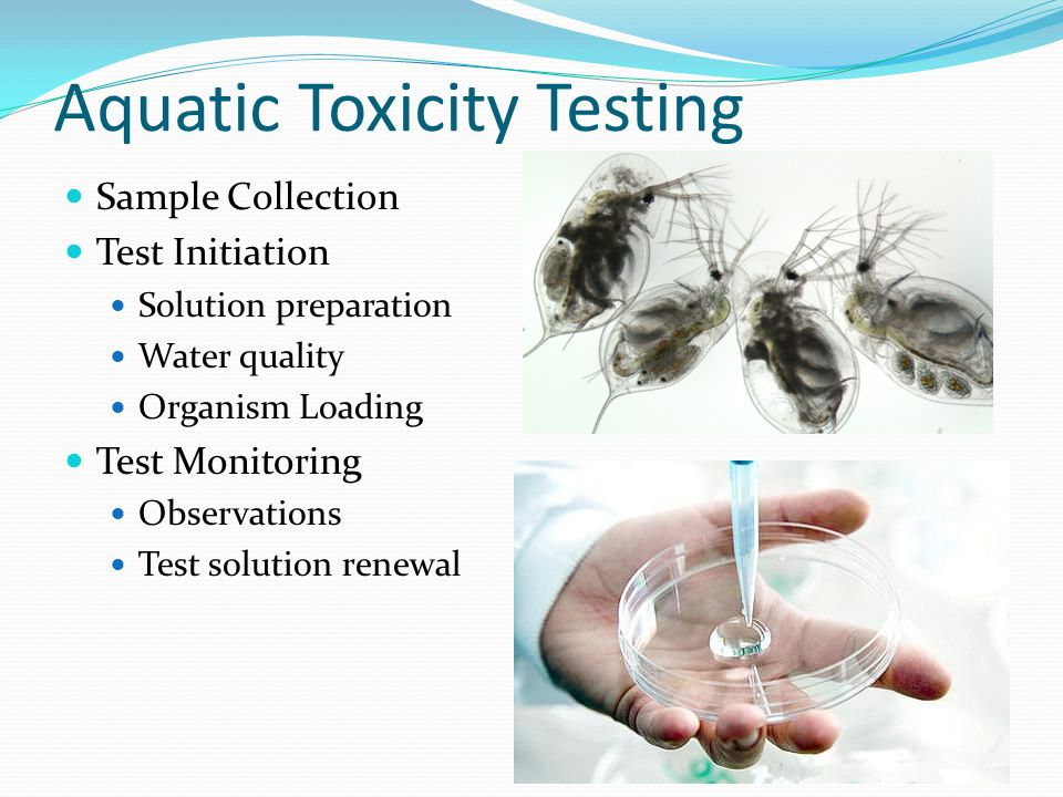 Aquatic Toxicity Testing Sample Collection Test Initiation Solution preparation Water quality Organism Loading Test Monitoring Observations Test solution renewal