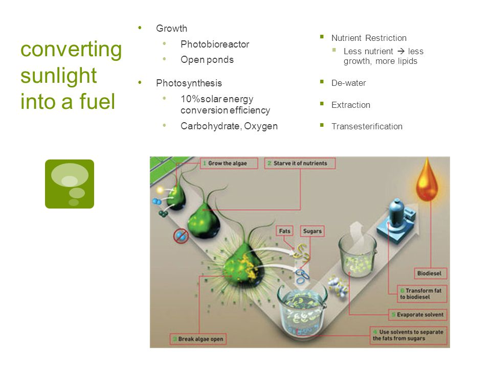 converting sunlight into a fuel Growth Photobioreactor Open ponds Photosynthesis 10%solar energy conversion efficiency Carbohydrate, Oxygen  Nutrient Restriction  Less nutrient  less growth, more lipids  De-water  Extraction  Transesterification