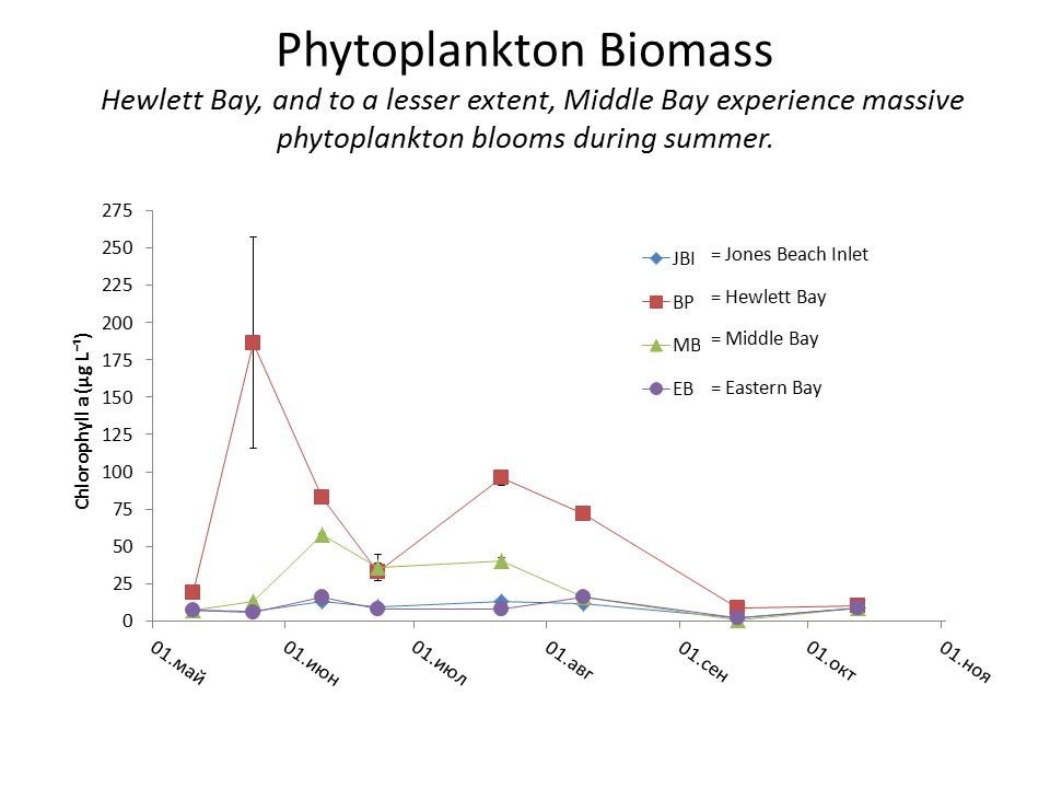 = Jones Beach Inlet = Hewlett Bay = Middle Bay = Eastern Bay Phytoplankton Biomass Hewlett Bay, and to a lesser extent, Middle Bay experience massive phytoplankton blooms during summer.