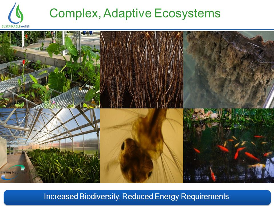 Complex, Adaptive Ecosystems Increased Biodiversity, Reduced Energy Requirements