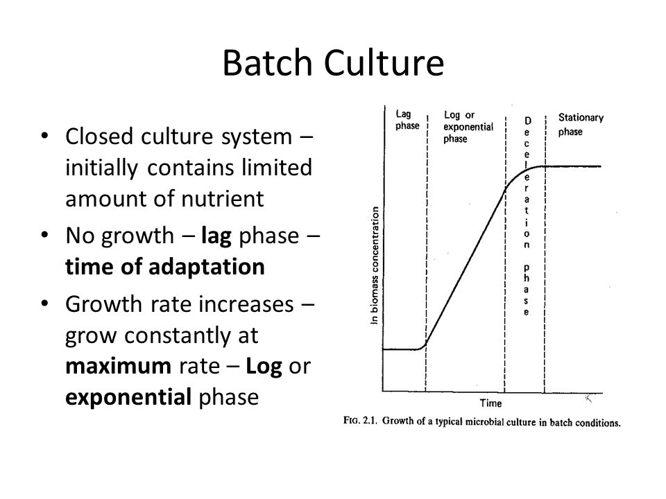 Batch Culture Closed culture system – initially contains limited amount of nutrient No growth – lag phase – time of adaptation Growth rate increases –