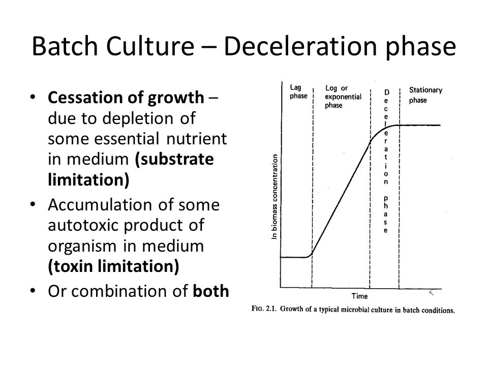 Batch Culture – Deceleration phase Cessation of growth – due to depletion of some essential nutrient in medium (substrate limitation) Accumulation of