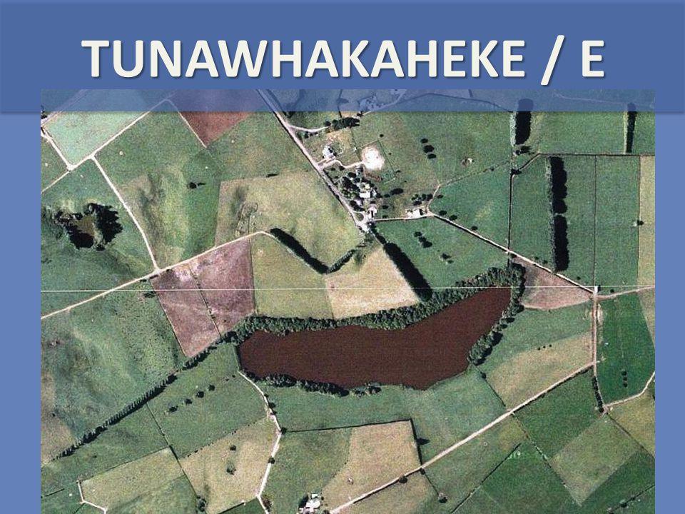 TUNAWHAKAHEKE / E
