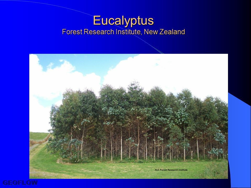 Eucalyptus Forest Research Institute, New Zealand