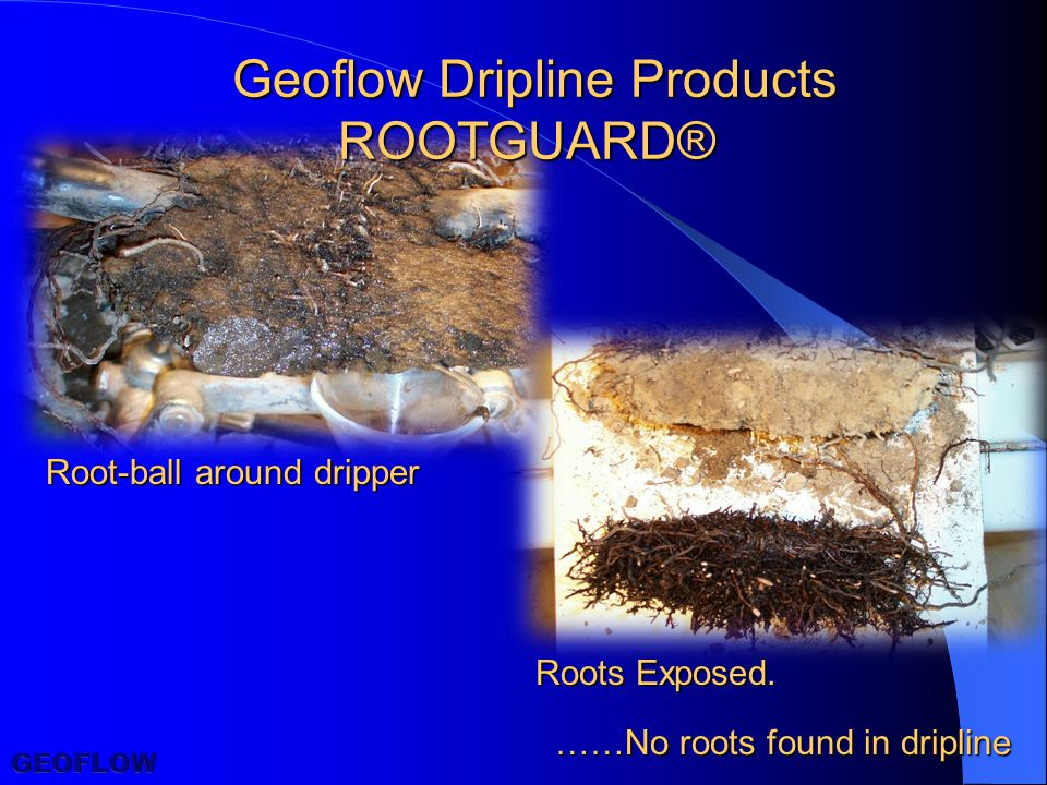 Geoflow Dripline Products ROOTGUARD® Root-ball around dripper Roots Exposed.