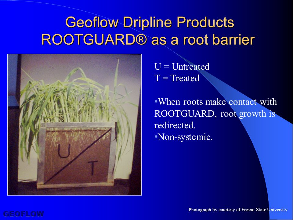 U = Untreated T = Treated When roots make contact with ROOTGUARD, root growth is redirected.