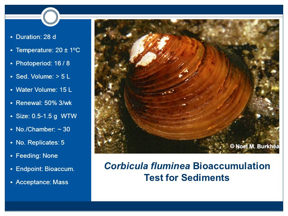 Corbicula fluminea Bioaccumulation Test for Sediments  Duration: 28 d  Temperature: 20 ± 1ºC  Photoperiod: 16 / 8  Sed.