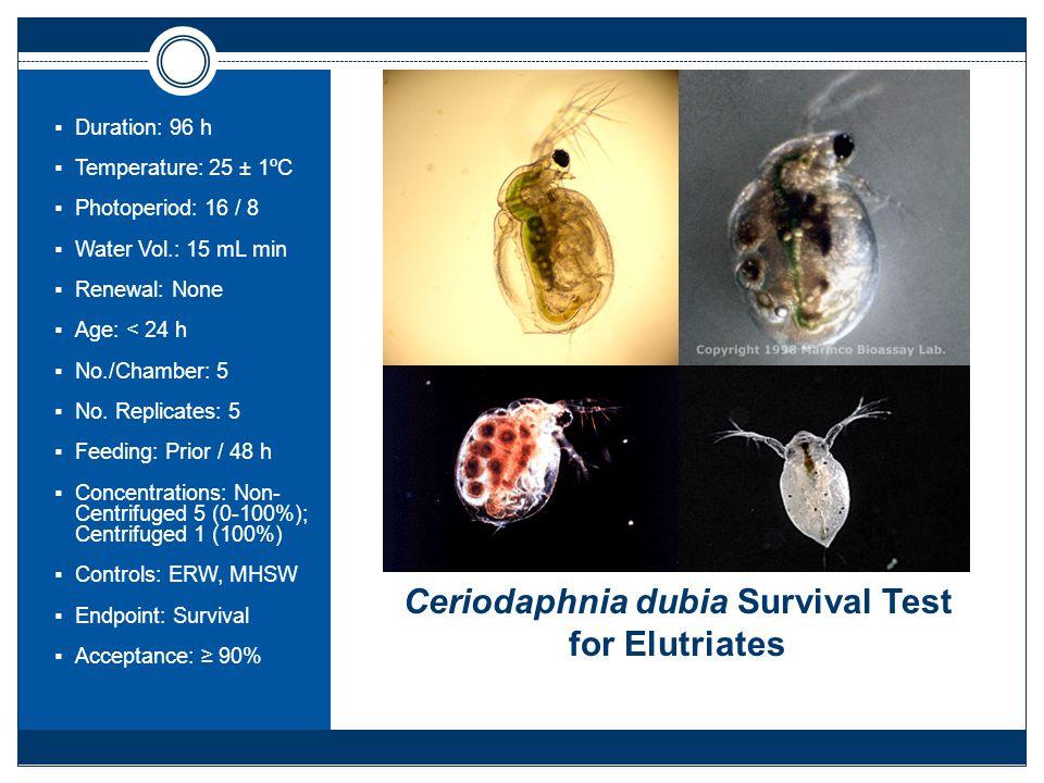 Ceriodaphnia dubia Survival Test for Elutriates  Duration: 96 h  Temperature: 25 ± 1ºC  Photoperiod: 16 / 8  Water Vol.: 15 mL min  Renewal: None  Age: < 24 h  No./Chamber: 5  No.