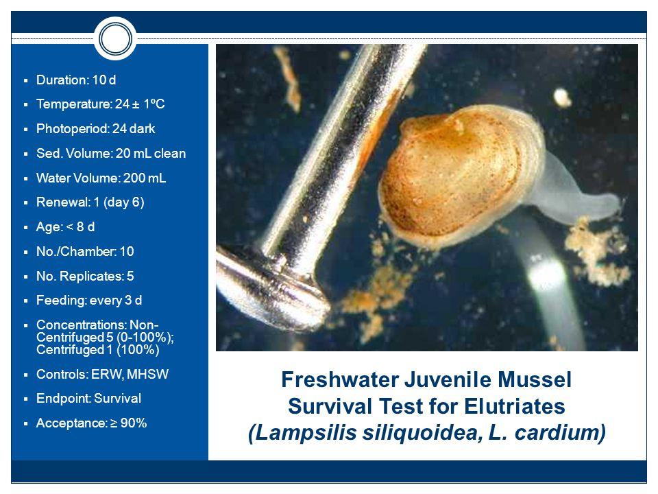 Freshwater Juvenile Mussel Survival Test for Elutriates (Lampsilis siliquoidea, L.