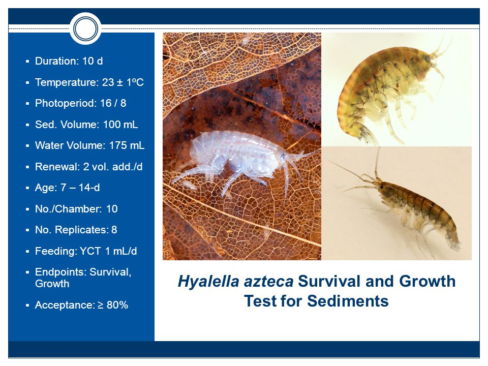 Hyalella azteca Survival and Growth Test for Sediments  Duration: 10 d  Temperature: 23 ± 1ºC  Photoperiod: 16 / 8  Sed.