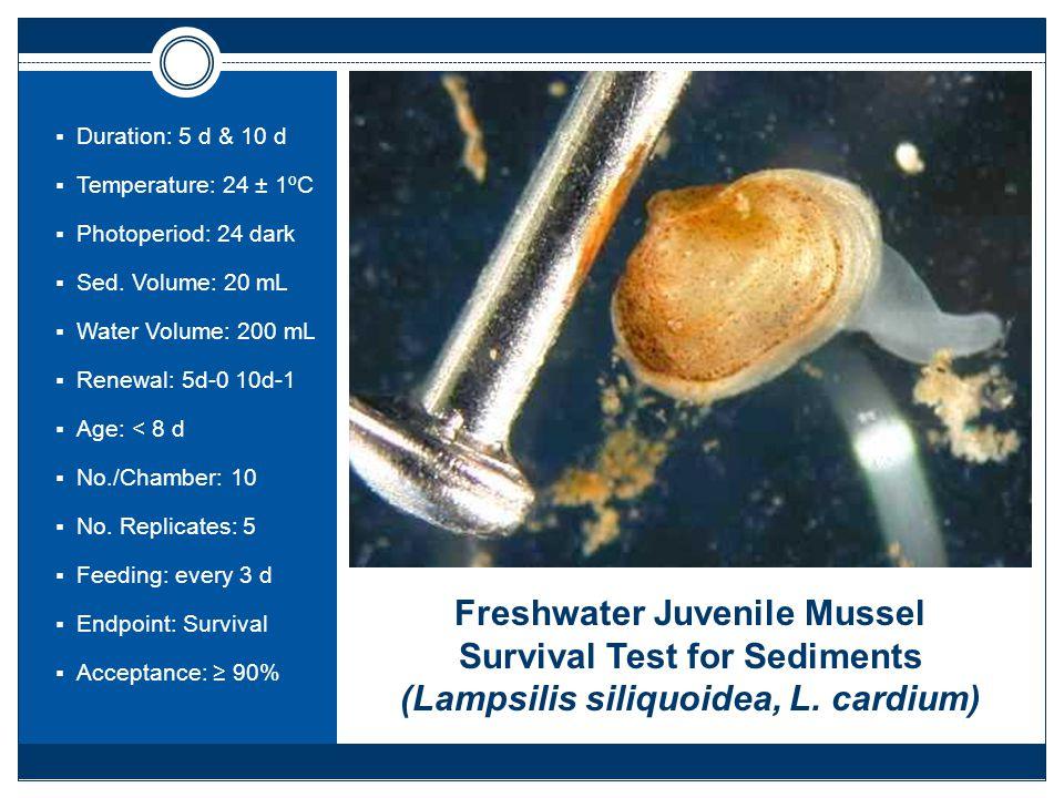 Freshwater Juvenile Mussel Survival Test for Sediments (Lampsilis siliquoidea, L.