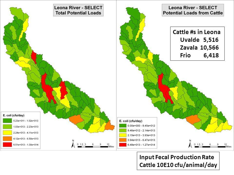 Cattle #s in Leona Uvalde 5,516 Zavala 10,566 Frio 6,418 Input Fecal Production Rate Cattle 10E10 cfu/animal/day