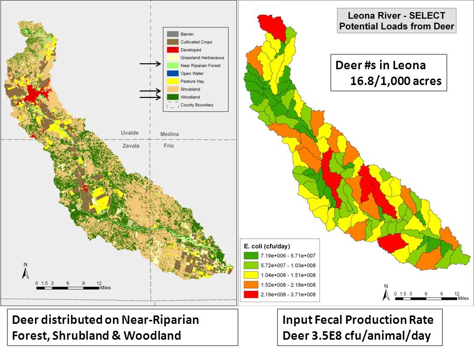 Deer #s in Leona 16.8/1,000 acres Input Fecal Production Rate Deer 3.5E8 cfu/animal/day Deer distributed on Near-Riparian Forest, Shrubland & Woodland