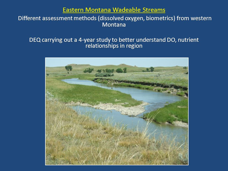 Eastern Montana Wadeable Streams Different assessment methods (dissolved oxygen, biometrics) from western Montana Different assessment methods (dissolved oxygen, biometrics) from western Montana DEQ carrying out a 4-year study to better understand DO, nutrient relationships in region