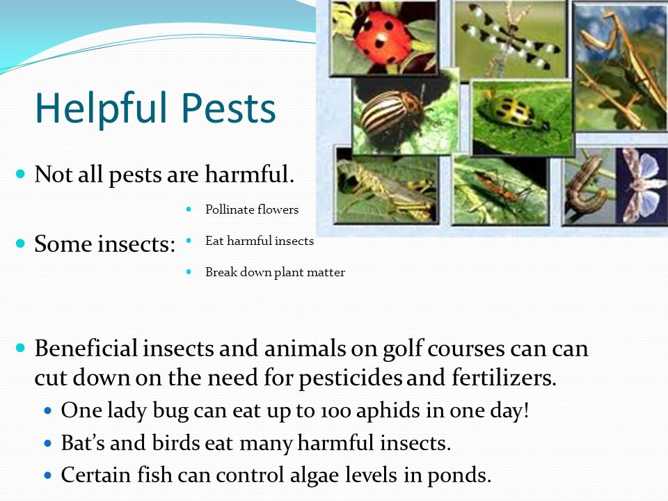 Helpful Pests Not all pests are harmful.