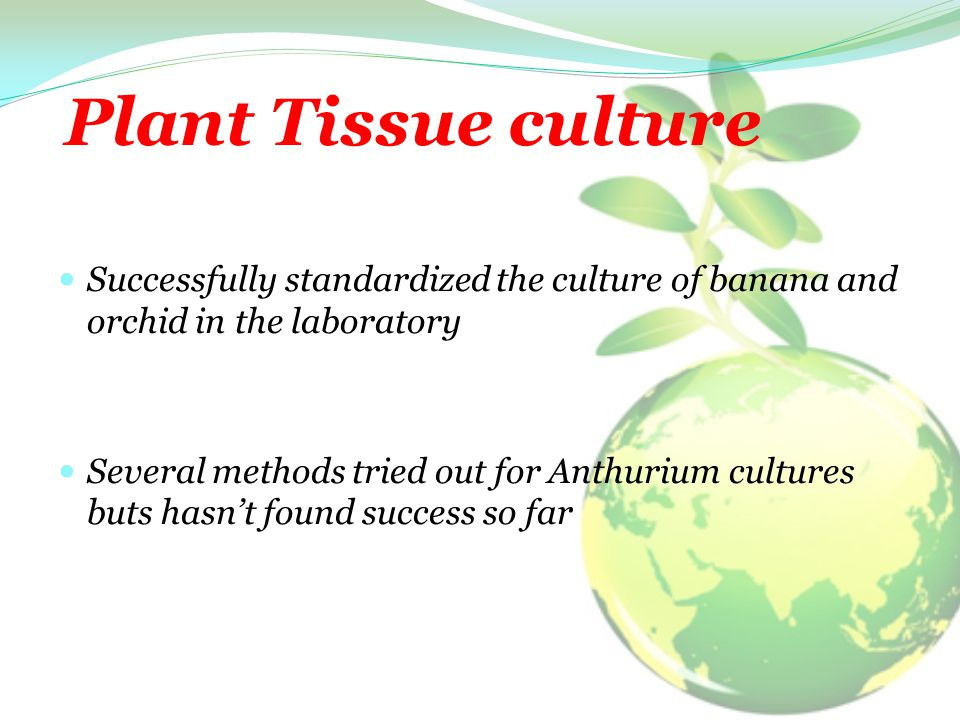 Plant Tissue culture Successfully standardized the culture of banana and orchid in the laboratory Several methods tried out for Anthurium cultures but