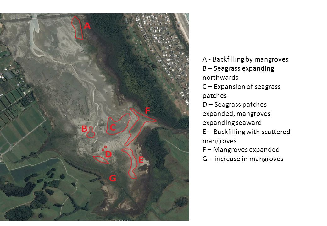 A - Backfilling by mangroves B – Seagrass expanding northwards C – Expansion of seagrass patches D – Seagrass patches expanded, mangroves expanding seaward E – Backfilling with scattered mangroves F – Mangroves expanded G – increase in mangroves